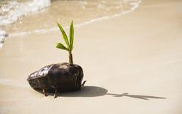 behandla som ett barn palmträdet Fotografering för Bildbyråer