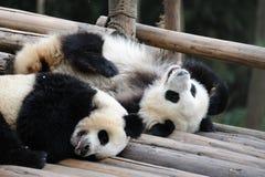 behandla som ett barn pandaen royaltyfria foton