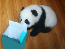 Behandla som ett barn pandan royaltyfria bilder