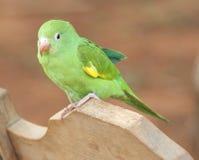 behandla som ett barn papegojabarn Royaltyfri Fotografi