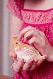 Behandla som ett barn papegojan i händer Royaltyfri Foto