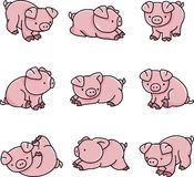 behandla som ett barn pigs Vektor Illustrationer