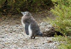 Behandla som ett barn pingvinet Arkivfoton