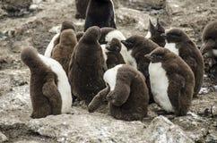 Behandla som ett barn pingvinkolonin Fotografering för Bildbyråer