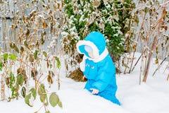 Behandla som ett barn pojken som förvånas med första snöinnehavsnö på hans hand Royaltyfria Foton