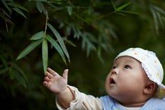 Behandla som ett barn pojken som ser bambusidor arkivbild