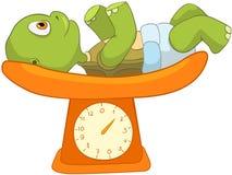 behandla som ett barn rolig sköldpaddavägning Fotografering för Bildbyråer