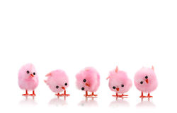 Behandla som ett barn rosa färgfågelfågelungar Royaltyfri Foto