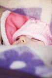 Behandla som ett barn sömnar i en sittvagn Royaltyfri Foto
