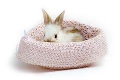 behandla som ett barn söt kanin Arkivfoton