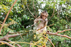 Behandla som ett barn sammanträde och att äta för macaqueapa Arkivbild