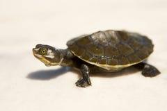 behandla som ett barn sköldpaddan Arkivbilder