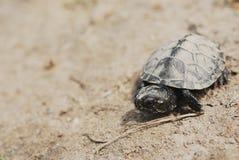 Behandla som ett barn sköldpaddan Arkivfoto