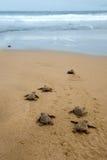 Behandla som ett barn sköldpaddor royaltyfria bilder