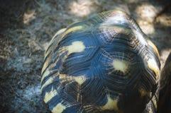Behandla som ett barn skalet för sköldpaddanederlaginsidan Arkivbild