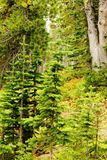 Behandla som ett barn skogen Fotografering för Bildbyråer
