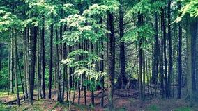 Behandla som ett barn skogen Royaltyfri Fotografi