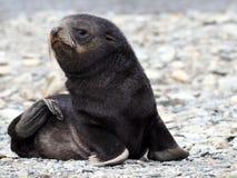 Behandla som ett barn skyddsremsan i Antarktis Arkivbild