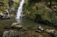 Behandla som ett barn skyddsremsan i naturlig skogpöl med vattenfallet Royaltyfria Bilder