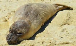 Behandla som ett barn skyddsremsan i sanden Arkivfoto