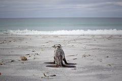 Behandla som ett barn skyddsremsan som att närma sig havet Arkivfoto