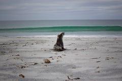 Behandla som ett barn skyddsremsan som att närma sig havet Fotografering för Bildbyråer