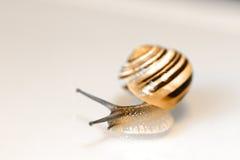 behandla som ett barn snailen arkivfoton