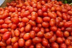 Behandla som ett barn tomaten Arkivbild