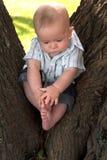 behandla som ett barn treen arkivfoton