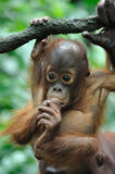behandla som ett barn utan orang Arkivfoton