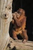 behandla som ett barn utan orang Royaltyfria Bilder