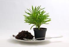 behandla som ett barn växter Fotografering för Bildbyråer