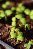 behandla som ett barn växter Royaltyfri Fotografi