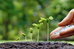Behandla som ett barn växtplantan Fotografering för Bildbyråer