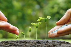 Behandla som ett barn växtplantan Arkivfoto