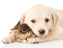Behandla som ett barn valphunden och den lilla kattungen tillsammans Isolerat på vit arkivbild