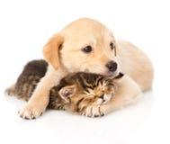 Behandla som ett barn valphunden och den lilla kattungen tillsammans Isolerat på vitbac fotografering för bildbyråer