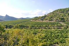 Behandlade plantor på lantgårdar i en liten dal mot bakgrunden av bergmaxima som är synliga i avståndet Fotografering för Bildbyråer
