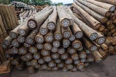Behandlade Wood Poles Fotografering för Bildbyråer
