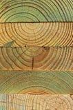 Behandlat sörja trän royaltyfri fotografi