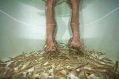 Behandling för fiskbrunnsortpedicure Arkivfoto
