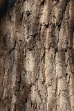 behang Stock Foto's