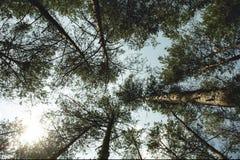 Behang met bomen in het bos, de hemel en de wolken stock afbeeldingen