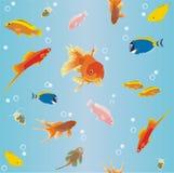 Behang met Vissen Stock Fotografie
