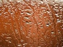 Behang oranje regendruppels royalty-vrije stock foto's