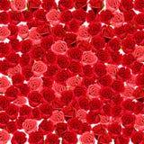 Behang van rode en roze rozen Stock Afbeelding