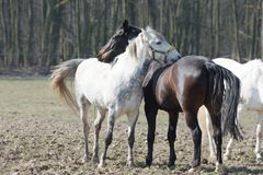 Horse emotion in spring royalty free stock images