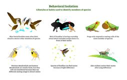 Behavioral isolation vector illustration collection set. Explanation and labeled examples in nature with birds, frogs and crickets. Behavioral isolation vector royalty free illustration