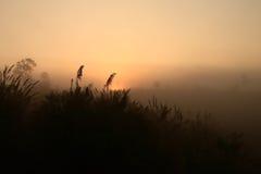 Behide de lever de soleil la montagne Photo libre de droits