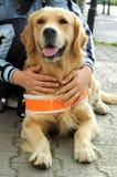 Behilflicher Hund für blinde Leute Stockbilder